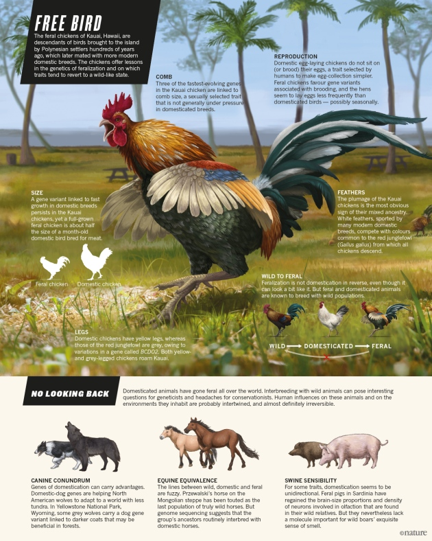 nature-freebird-graphic-21-01-16-v3